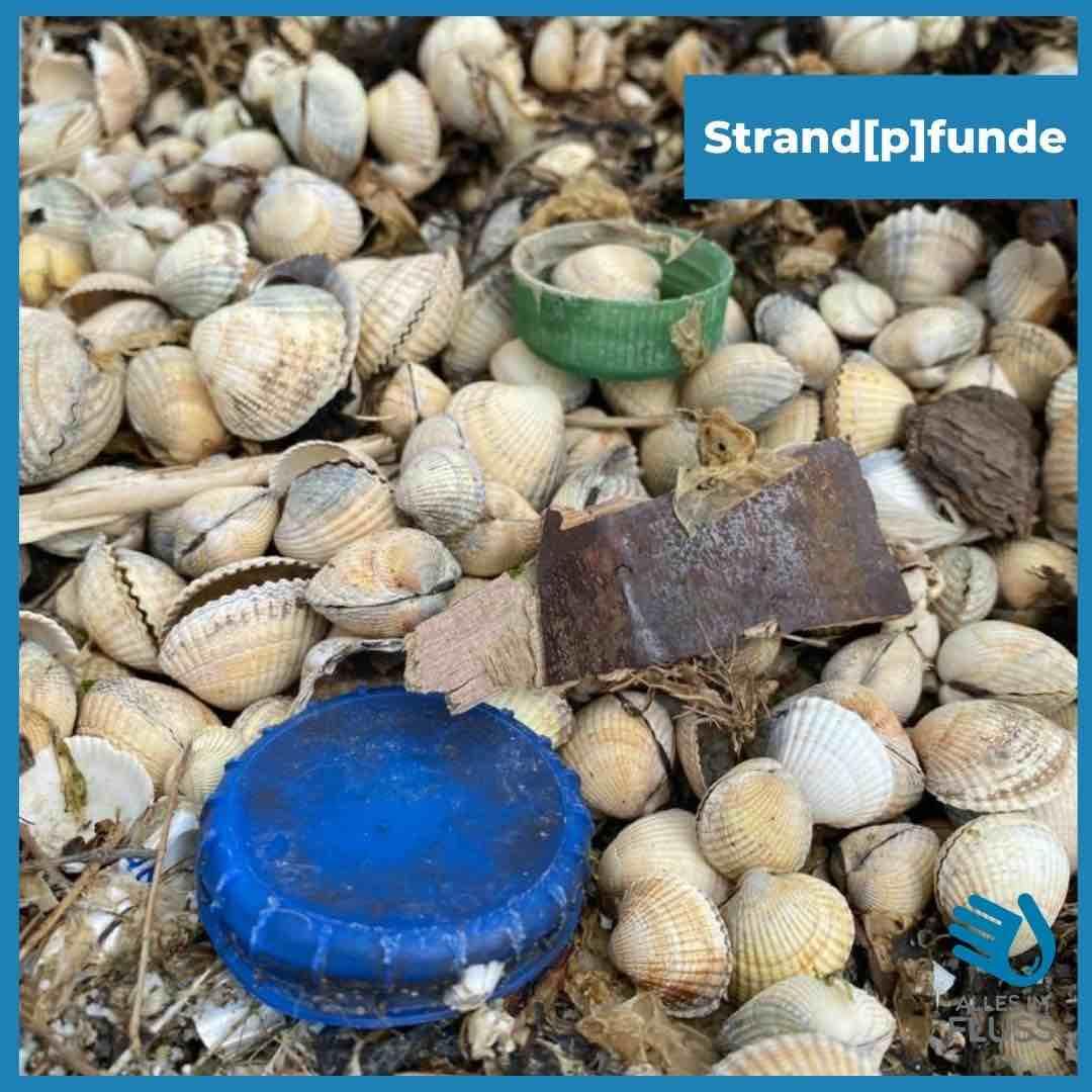 Strandpfunde blauer Deckel