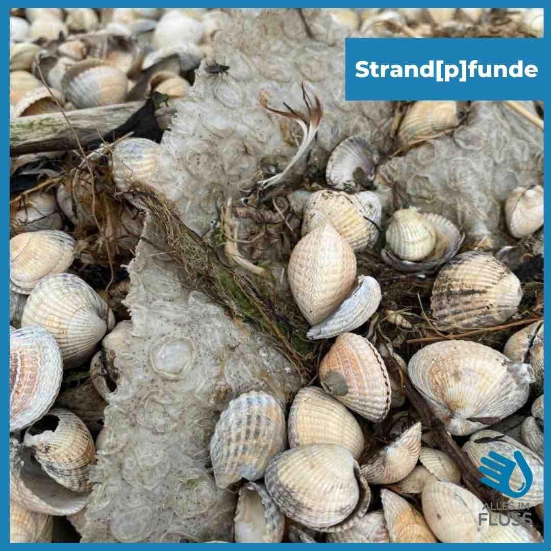 Strandpfunde Knisterfolie